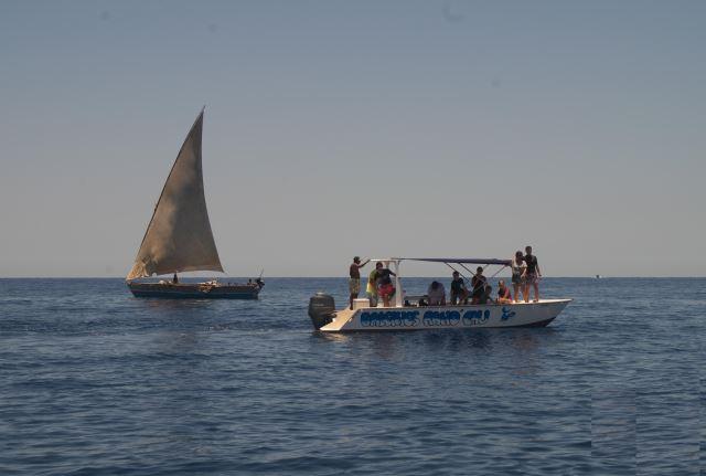 Observer les baleines à Madagascar.