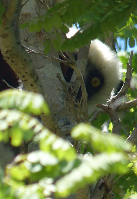 Randonnées et trek à Madagascar.