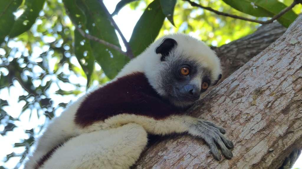 Le Top 4 Des Sites Pour Decouvrir Les Lemuriens