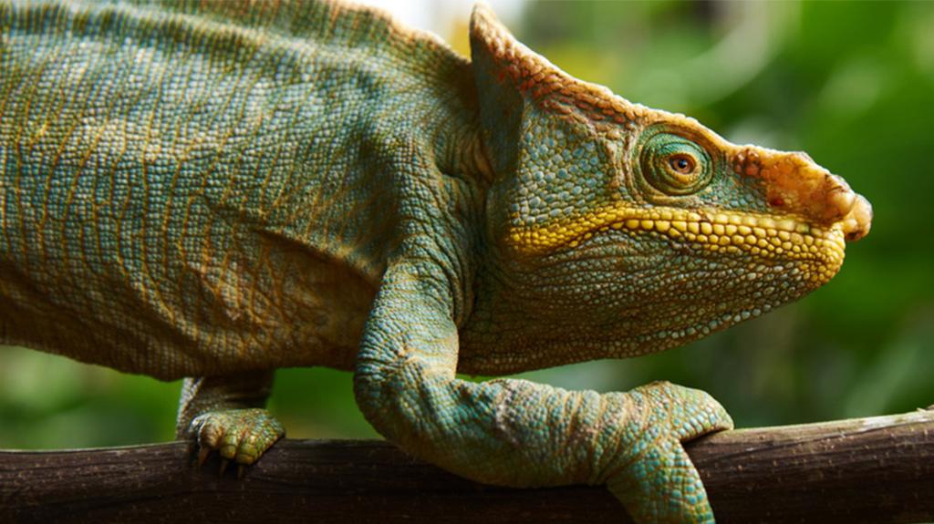 Madagascar : une biodiversité d'exception