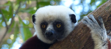 Madagascar Autrement, devis gratuit