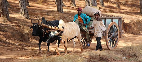 Les Hautes Terres Centrales de Madagascar.