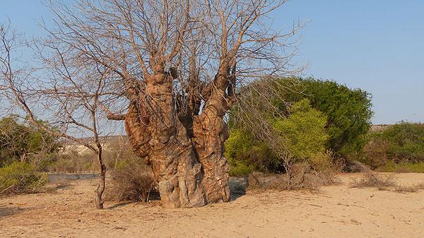 La côte Sud Ouest de Madagascar.