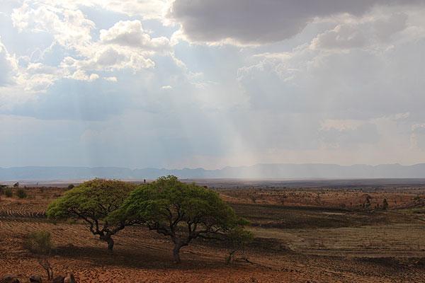 Les plateaux de Madagascar.