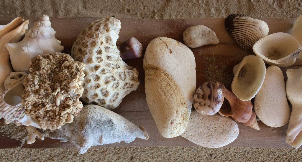 Coquillages de Madagascar.